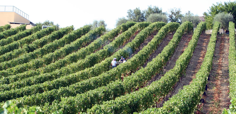 Tenuta di Fra' - Winery